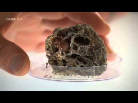 Planet Ant - Life Inside The Colony - BBC klip izle