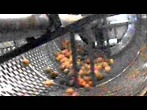 Оборудование для переработки грецкого ореха. Калибратор-сортировщик грецкого ореха