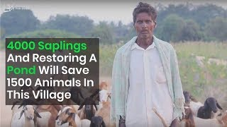 Donate To Quench The Thirst Of Animals And Plant 4000 Saplings To Restore A Forest In This Village