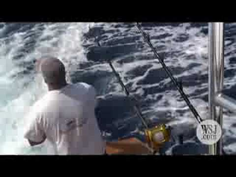Catching a Mega-Marlin