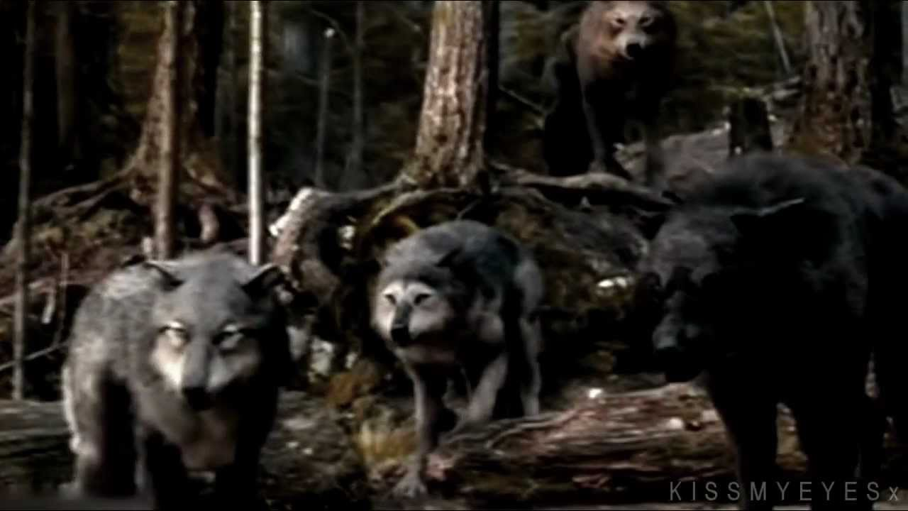 Werewolf Twilight Pack Twilight Saga   Wolf Pack