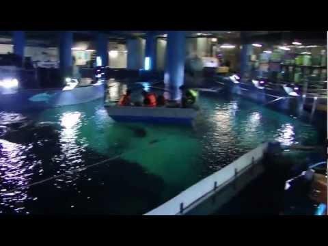 SIAM Ocean World – Bangkok 2