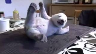 The World's Cutest Polar Bear Baby