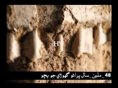 Harunyahya  Fossils Refute Evolution In Sindhi.mp4 video
