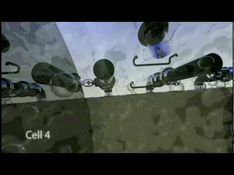 Видео как режут быка
