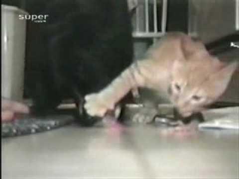 cat egoiste видео приколы с животными - YouTube: www.youtube.com/watch?v=8o33O2BbxVI