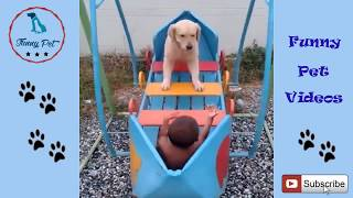 Funny dog videos for kids to watch - Funny Dogs Video Compilation 2018 HD
