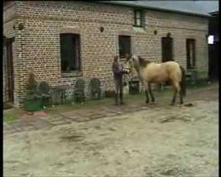 """Séparation de 2 chevaux """"collés"""""""