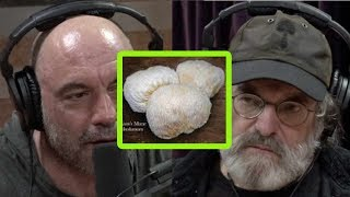 Paul Stamets: Miracle Mushrooms, Mycelium, and Your Health