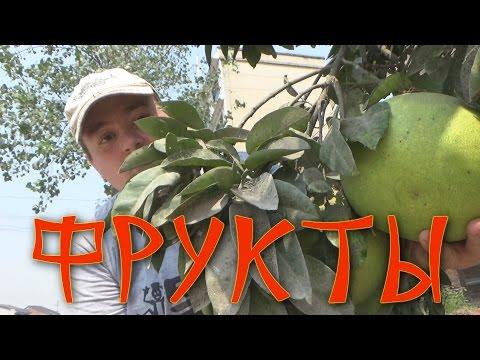 Фруктовые мечты: бесхозные фруктовые деревья