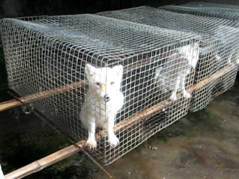 Dogs farm for fur in china animal cruelty youtube for Skin it fish skinner