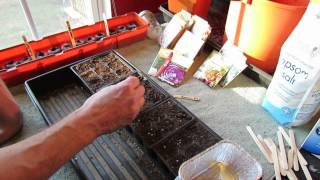 Great Herbs! How to Seed Start Rosemary Indoors: Start Early! - MFG 2014