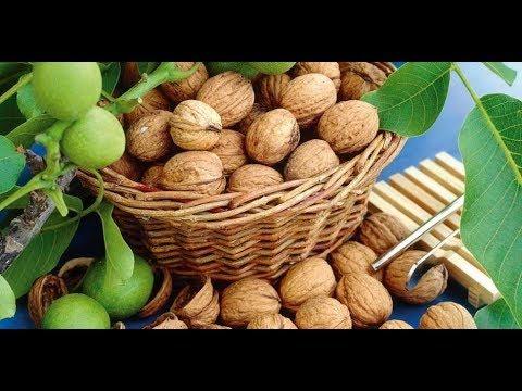 Сад- грецкий орех, обрезка
