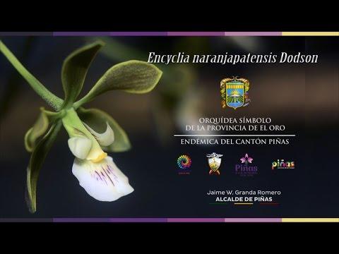 Declaratoria pública de la orquídea símbolo de la