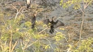 محمية الدندر الطبيعية في السودان