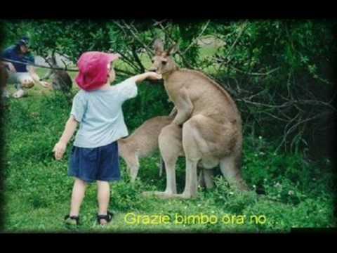 cazzate in tutto il mondo…..animali pazzi
