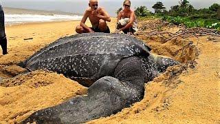 15 Strange & Unusual Turtles