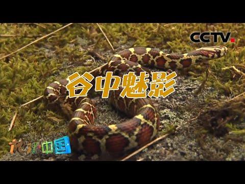 中國-地理·中國-20210224 谷中魅影