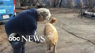 Homeowner finds dog upon return to property after catastrophic wildfire