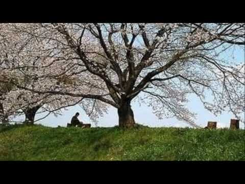 Rufus Wainwright - Peach Trees