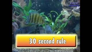 Feeding your CICHLIDS