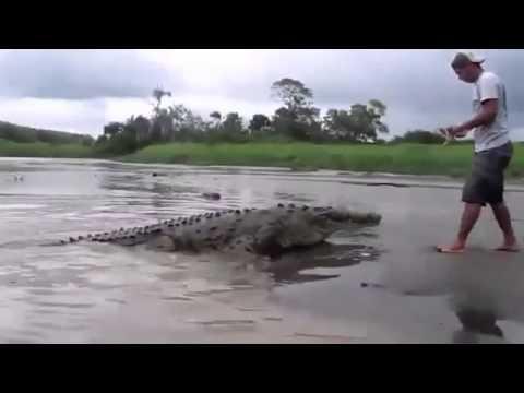 Едва не накормил собой крокодила.