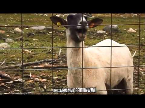 Eminem - Just Lose It Goat Edition video