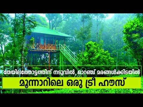 Best Tree House Resort in Munnar? Visit Dream Catcher Plantation Resort to make your stay memorable