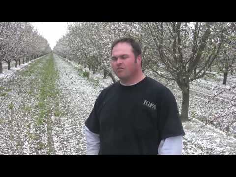 Meet the Men Who Grow Your Almonds Part 2