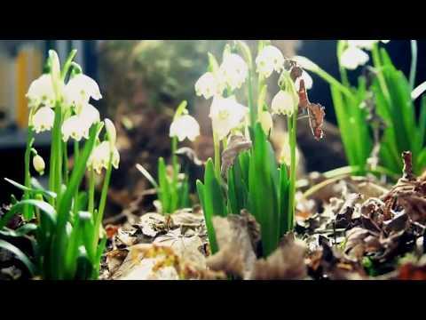 Son Zeng - Institut qesebe, 11-1 sinfi, 66-ci buraxilish Official Video HD