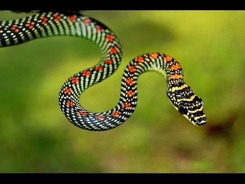 Serpente voadora youtube - Serpente collegare i punti ...