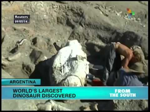 World's largest dinosaur discovered in Argentina