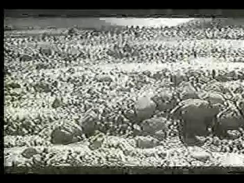 TERREMOTO YUNGAY  ALUVION  YUNGAY ANCASH 1970  ALUD TERREMOTO DE YUNGAY ALUVIÓN TERREMOTO DE YUNGAY