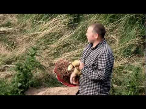 Ferreting in Norfolk Music Videos