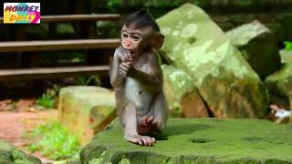 Wonder! Ashley do this Polly love much & happy|Polly love Ashley cos she care well|Monkey Daily 1261