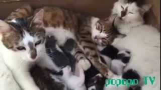 Parents and Cute Kittens || Osman Çabuk