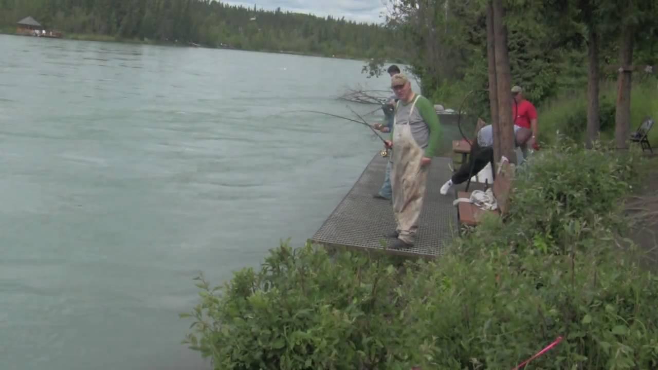 Sockeye salmon youtube for Kenai river fish counts