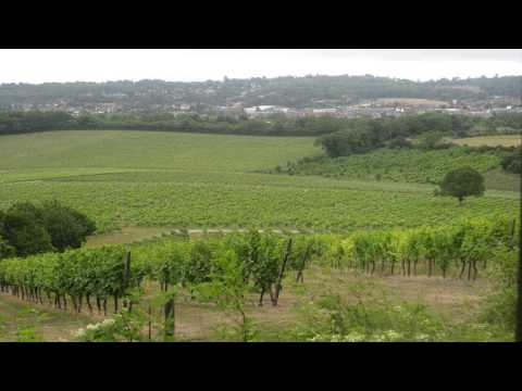 Denbies wine estate Epsom and Banstead Surrey