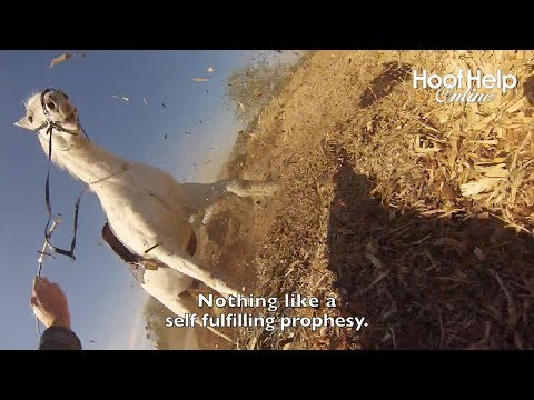 Epic Fail / Fall - Beware of Free Horse! - Mutant Appaloosa - Filmed with GoPro Hero 3.