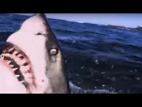 Great White Shark Attack - Predators - BBC