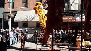 CNY 2019 Lion Dance for the year of the Pig