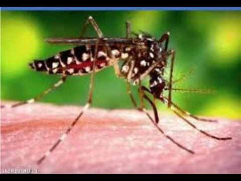 Approximately 20 Chikungunya Cases Reported in New Jersey 2014