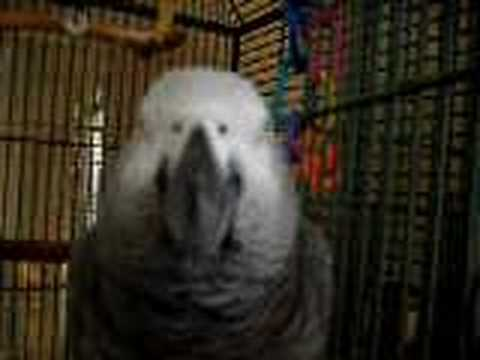 MJ, the African Grey Parrot, Breaking My Camera