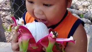 Đồ chơi trẻ em bé pin ăn trái thanh long ❤ PinPin TV ❤ Baby toys eat dragon fruit
