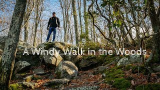 Landscape Photography A Windy Walk in the Woods