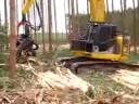 colheita de eucalipto