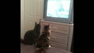 Kitty TV