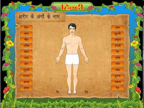 Human Body Parts Name (Body Parts) in Hindi for Class 1st Kids