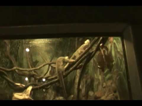 Squirrel Monkeys At The Bronx Zoo Video