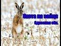 Охота на зайца, Одесская область.